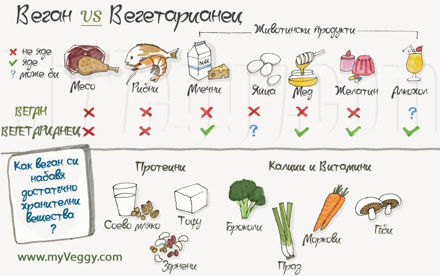 Подробна инфографика: какво ядат Вегетарианците и Веганите